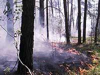 На Камчатке выгорело уже более 4 тысяч гектаров леса