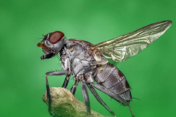 Ученые назвали комнатных мух источником рака. 379781.jpeg