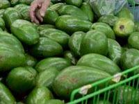 Смертельную бактерию нашли в испанских авокадо. 239783.jpeg