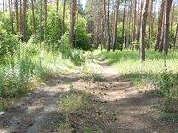 Похищенного мальчика нашли убитым во владимирском лесу. 261786.jpeg