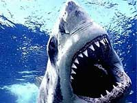 Акулы начали нашествие на пляжи Массачусетса