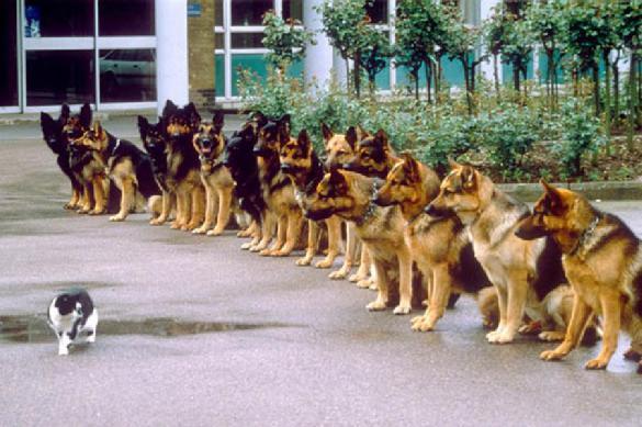 Ученые узнали, что на самом деле любят есть кошки и собаки. 387788.jpeg
