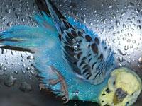 Тонущего попугая спасли дайверы