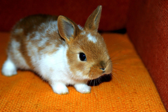 Что нужно для содержания декоративного кролика. 402790.jpeg