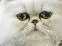 У безответственной хозяйки отобрали 4 собаки и 10 кошек. 244791.jpeg
