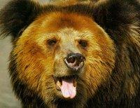 Медведь задрал двух человек на арене цирка в Бишкеке