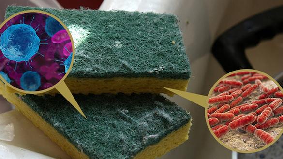 Кухонные губки назвали рассадником неизлечимых болезней. 372793.jpeg