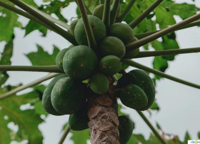 СБ ООН отнес запуск северокорейской ракеты к