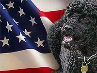 Президент США готов официально представить миру свою собаку