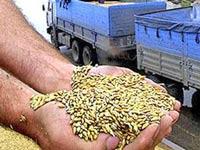 Инцидент с российским зерном связан с борьбой между посредниками