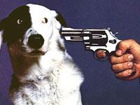 Американец застрелил своих собак, не зная, куда их деть на время