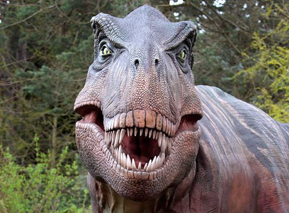 Исследование: динозавры сидели на ЛСД. динозавры, почему вымерли динозавры, история Земли, психоделики