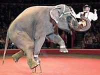 В Боливии запретили цирки с животными
