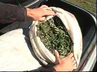 В Таджикистане изъято более 80 кг наркотиков
