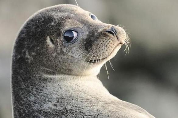 Морской котик задержал пьяного мужчину в дельфинарии Купчино. 376806.jpeg