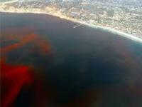 В озере Виктория завелись зловонные ядовитые водоросли