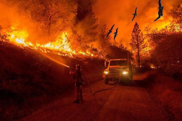 Ученые: лесные пожары устраивают птицы. 381807.jpeg