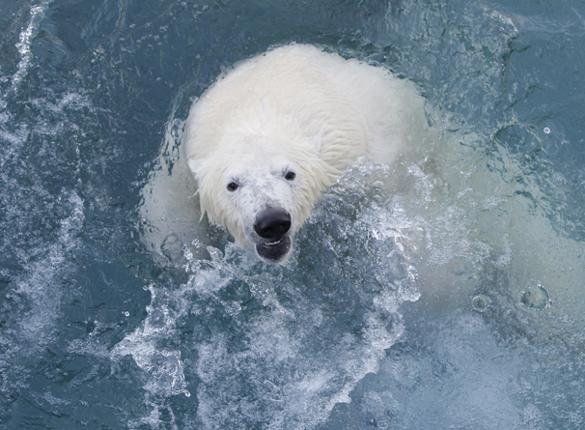Неизвестные факты освоения Русской Арктики. 293808.jpeg
