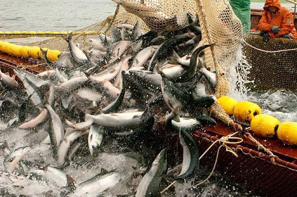 Минсельхоз предлагает увеличить ставки сбора завылов рыбы