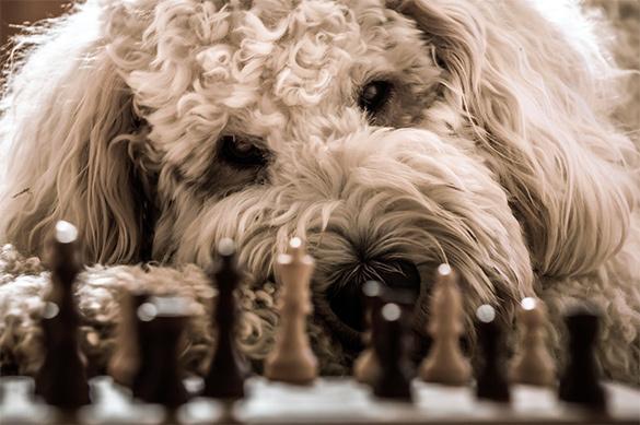 """Собаки способны улавливать """"запах страха"""". Собаки способны улавливать запах страха"""