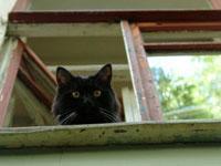 Кошки две недели ели умершую хозяйку. 242814.jpeg