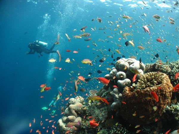 Шесть эпических островов Малайзии, которые должен посетить каждый любитель Азии. 403814.jpeg