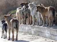 Зеленоградские власти запретили кормить бродячих собак