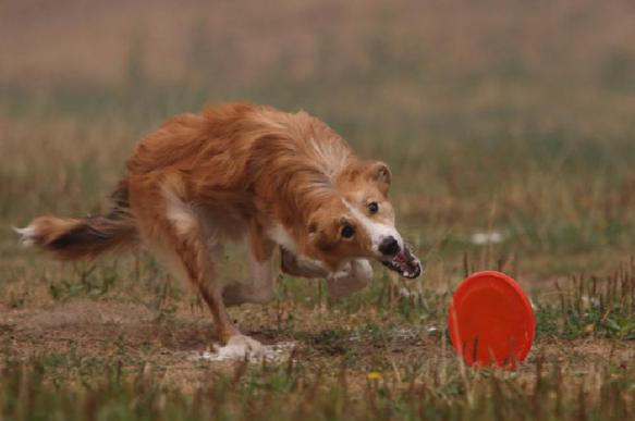 Выбираем игрушку для собаки. 398818.jpeg