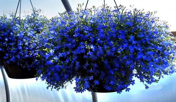 Лучшие растения для подвесных горшков. 403819.jpeg