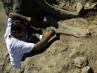 Братская могила мамонтов найдена в Сербии. 261820.jpeg
