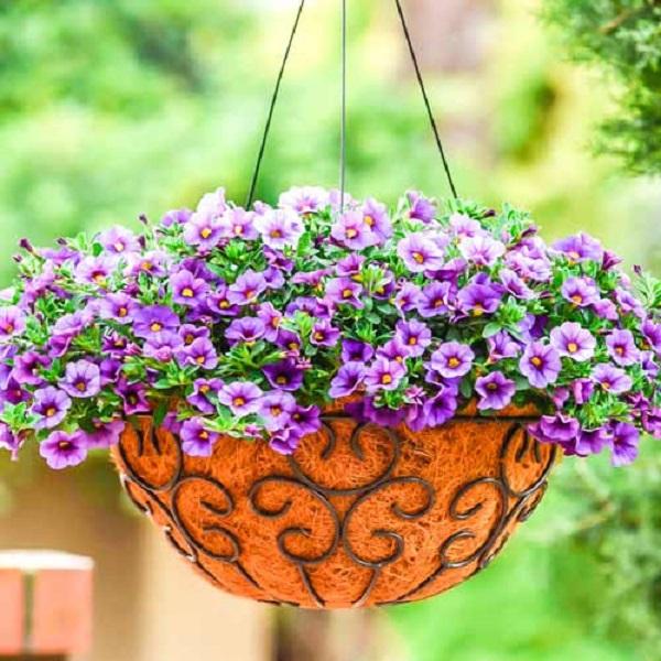 Лучшие растения для подвесных горшков. 403820.jpeg
