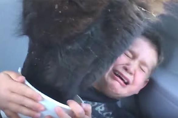 Лама испугала ребенка, авсего лишь хотела поесть