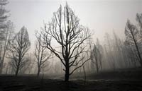 Водоем говорящих деревьев вызывает слуховые галлюцинации?