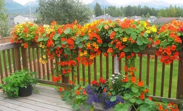 Лучшие растения для подвесных горшков. 403822.jpeg