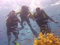 Египетские спасатели возобновили поиски российских дайверов