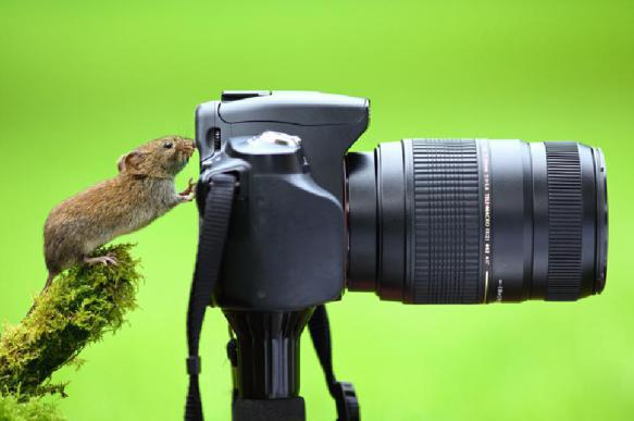Декоративные мыши: история создания. 397828.jpeg