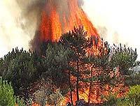 Леса Забайкальского края горят, как спички
