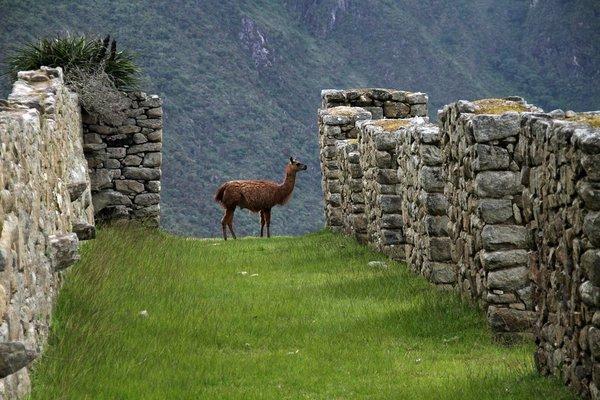 Перу, таинственная страна инков. Перу, таинственная страна инков.