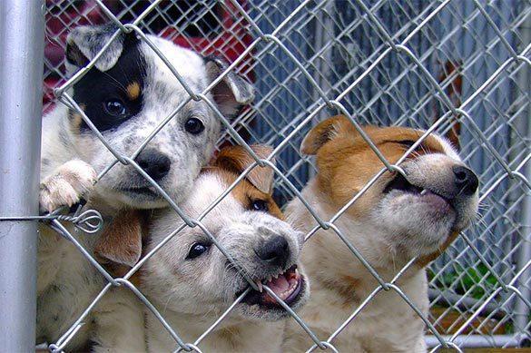 В Екатеринбурге расследуют дело о заморенных голодом собаках и к