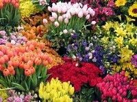 цветы. 235833.jpeg