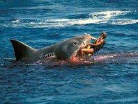 Тренер по таэквондо отбилась от акулы боевыми приемами. 273836.jpeg
