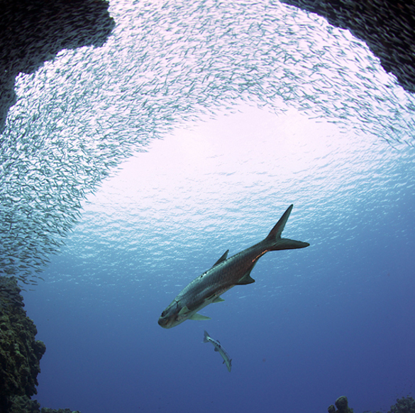 Атланты жили на Багамских островах. Атлантида, атланты, древняя цивилизация, древний мир