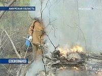 В Приамурье горят гектары леса