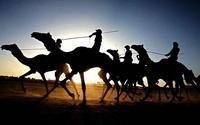 ОАЭ выплатили компенсации верблюжьим жокеям