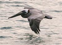 Птицелюди - боковая ветвь эволюции?