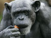 У обезьян нашли новый смертельный вирус. 241839.jpeg