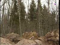 В Амурской области найдены тела убитых девочек