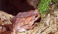 Австралийцы провели день уничтожения жаб