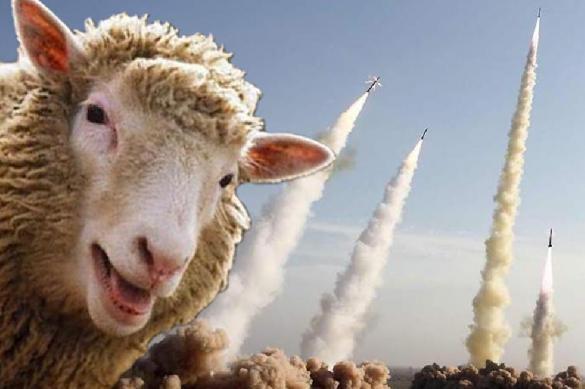 Удар под дых: румынские овцы атаковали американскую систему ПРО. 381848.jpeg