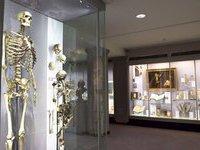 На зимних каникулах московские музеи будут работать бесплатно. 251849.jpeg